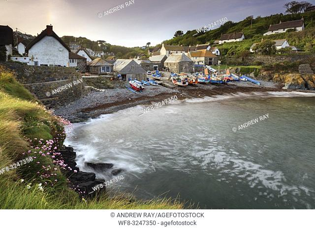 Spring flowers on The Todden at Cadgwith on Cornwall's Lizard Peninsula, provide the foreground interest in this image which was captured on a morning in mid...