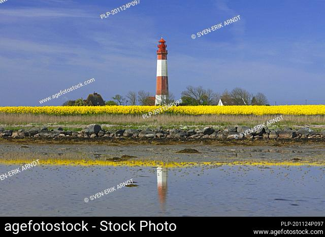 Lighthouse Fluegge / Flügge and flowering rape field on Fehmarn, island in the Baltic Sea off the eastern coast of Schleswig-Holstein, Germany