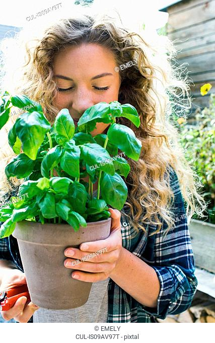 Young woman holding fresh basil in pot