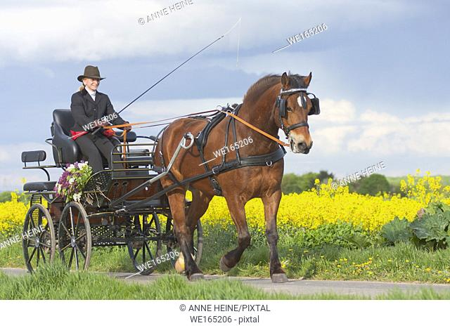Woman coaching a horse-drawn carriage on a small countryroad in Bornheim near Bonn, Germany