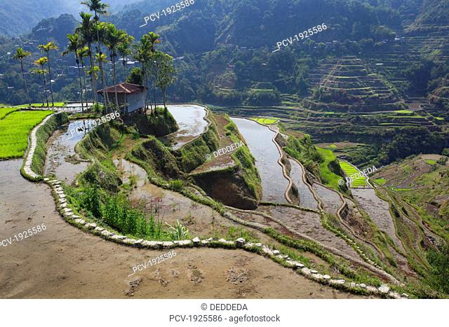 the landscape near the small city of banaue, famous for its ancient mud-walled rice terraces, banaue, cordillera region, north luzon, philippines