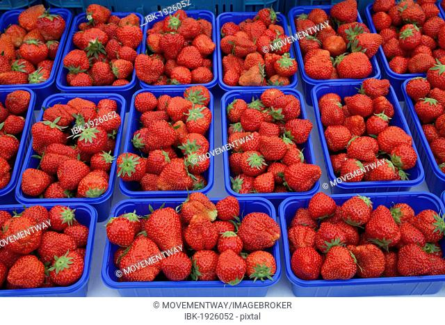 Bowls with strawberries on the market