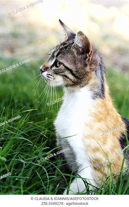 Side view of a calico cat sitting in the grass