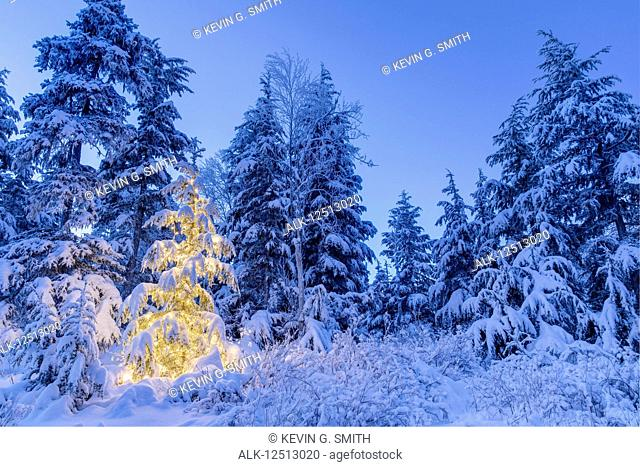 A small Mountain Hemlock (Tsuga mertensiana) tree glows from the lights wrapped around it, fresh snow covering it and the surrounding trees