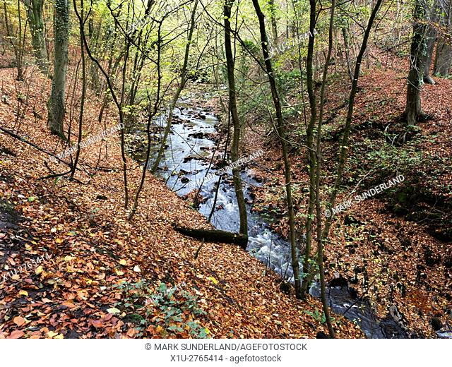 Eller Beck in Skipton Castle Woods in Autumn Skipton North Yorkshire England