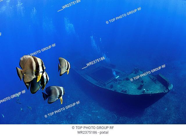 China Hainan Province Sansha City South Sea the Nansha Islands Johnson Reef Watership Down 2010