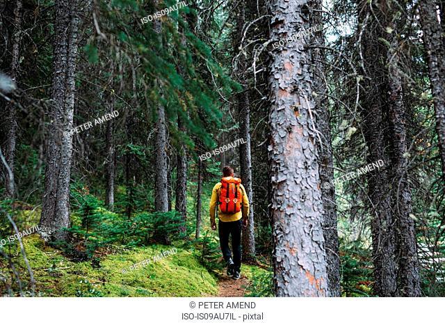 Rear view of mid adult man carrying orange packback trekking through forest, Moraine lake, Banff National Park, Alberta Canada