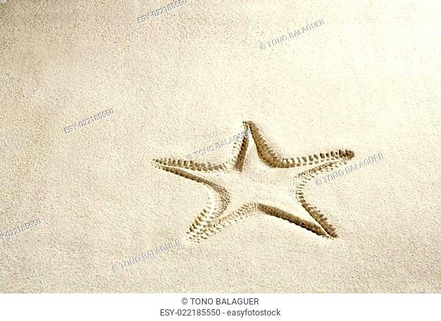 beach starfish print white caribbean sand summer