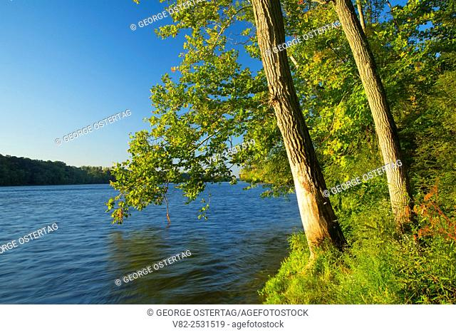 Connecticut River shoreline, Windsor Locks Canal State Park Trail, Connecticut
