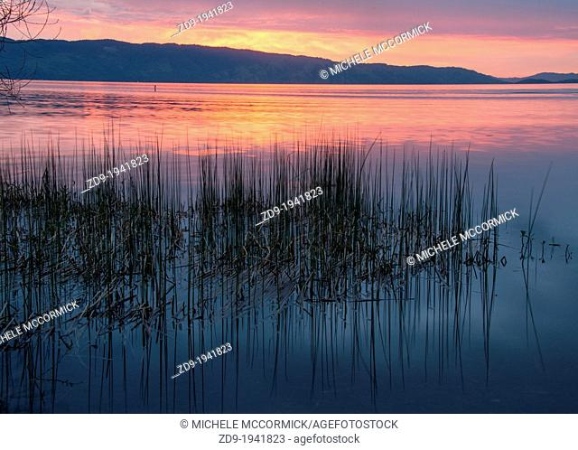 Reeds are reflected in the dawn light on California's Clear Lake