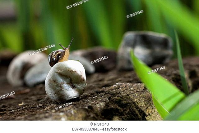 Snail sitting on white rock