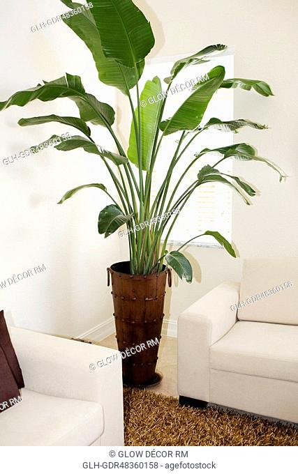 Potted plant in a living room