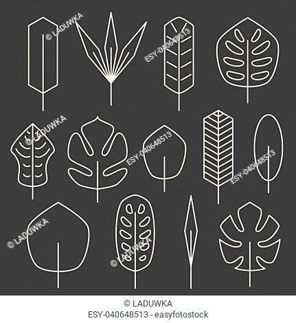 Minimalistic linear palm leaf set on grey background