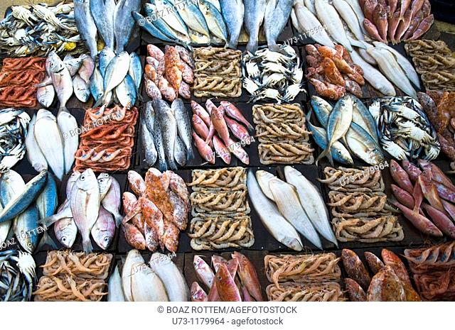 Fresh fish sold in the morning market in Alexandria, Egypt