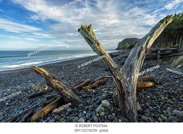 Driftwood stands up on Agate Beach, the north shore of Haida Gwaii, with Tow Hill in the distance at sunrise; Masset, British Columbia, Canada
