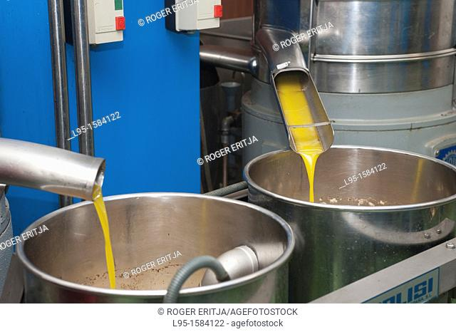 Primary oil from olive fruits as it comes out of the cold press procedure at a traditional olive mill, Catalonia, spain
