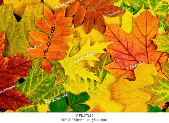 A lot of colorful autumn leaves for background