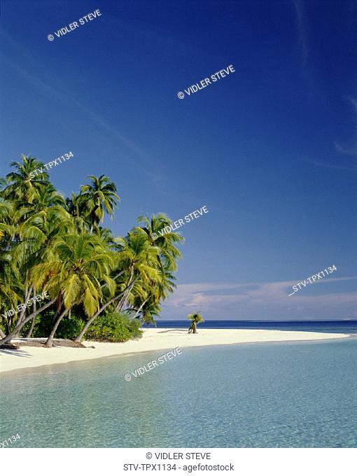 Atoll, Beach, Holiday, Indian ocean, Landmark, Maldive islands, Maldives, Palm trees, Sand, Sea, Tourism, Travel, Tropical, Vaca