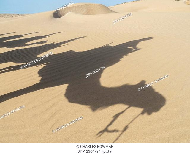 Shadows of camels and tourists on a beach trek on the sand; Essaourira, Morocco