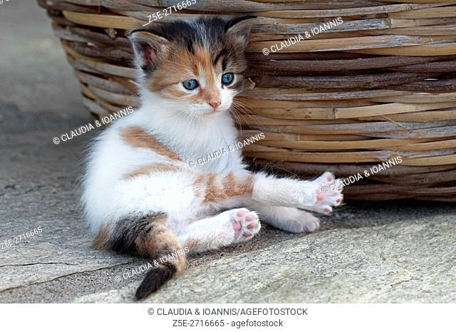 Four weeks old kitten lying next to a basket outdoors