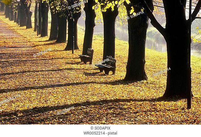 Europa, Austria, Niederoesterreich, Parbasdorf, Allee mit Parkbank im Herbst