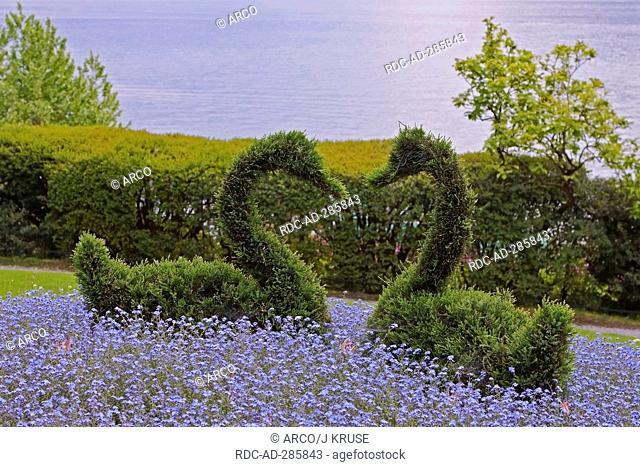 Boxwood, figured as swan, botanical garden, Villa Carlotta, at Lake Como, Tremezzo, province of Como, Lombardy, Italy / Buxaceae, Lago di Como