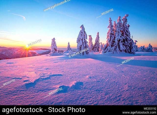 Winter woodland in Mala Fatra mountain range, Slovakia