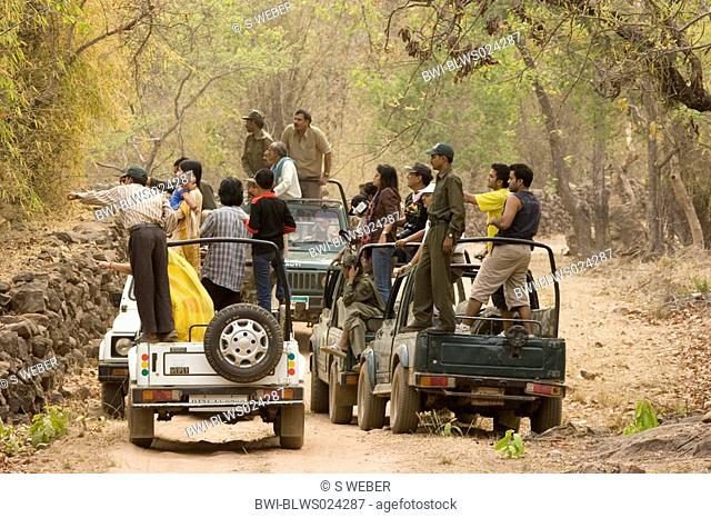 Indian people looking for tiger, standing on jeeps, India, Madhya Pradesh, Bandhavgarh NP, Mai 05