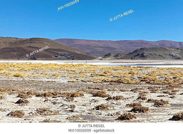 Lithium Salt Lake, Salar del Hombre Muerto, Catamarca Province, Argentina, South America
