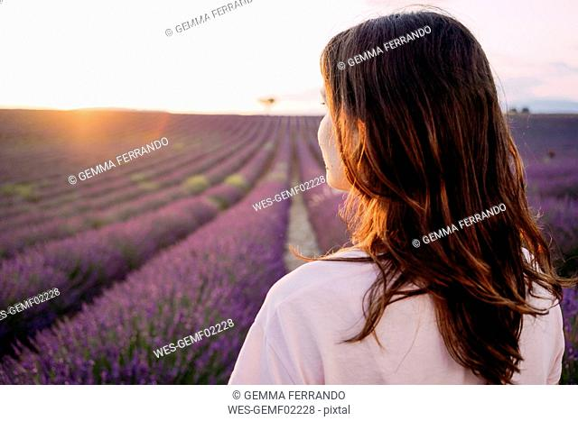 France, Valensole, back view of woman in front of lavender field at sunset