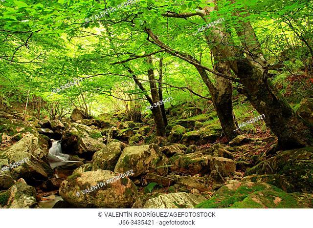 Landscape on the Los Arrudos route. Stream Los Arrudos. Natural park Redes. Asturias
