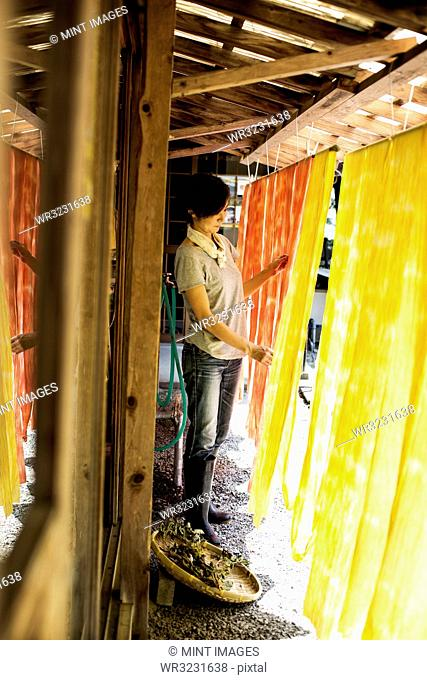 Japanese woman standing outside a textile plant dye workshop, hanging up freshly dyed bright yellow and orange fabric