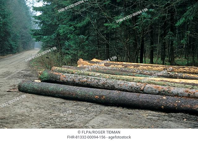 Logging, pile of cut trees, Bialowieza N P , Poland