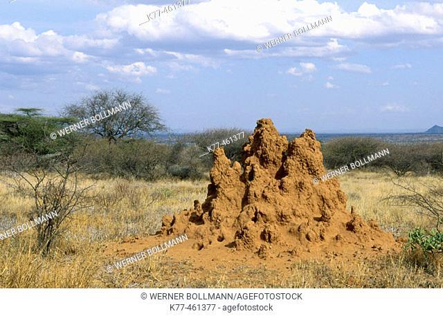 Termite mound. Smburu, Kenya