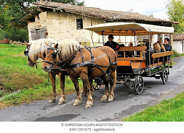 stroll with a horse-drawn carriage, Pre Fleuri Farm, Sermentizon, Livradois-Forez Regional Nature Park, Puy-de Dome department, Auvergne region, France, Europe