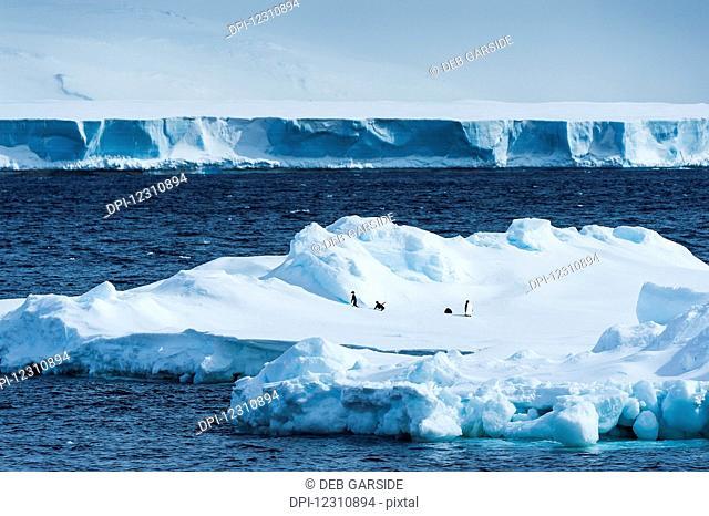 Penguins on an iceberg; Antarctica