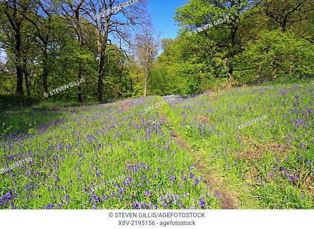 Bluebells, path and waymarker, Newton Wood, North Yorkshire, North York Moors National Park, England, UK