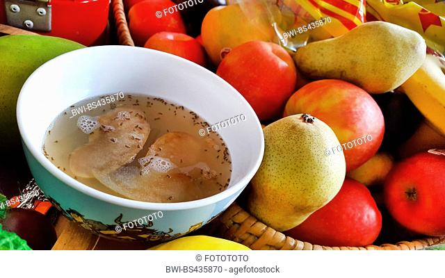 vinegar fly, fruit fly (Drosophila melanogaster), selfmade fruit fly trap, a bowl with water, vingear, detergent an apple slices, Germany