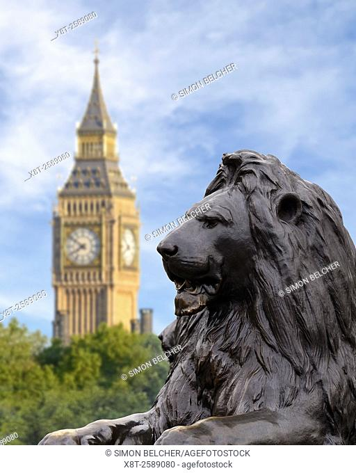 Trafalgar Square Lion with Big Ben in the Background, London, England, UK