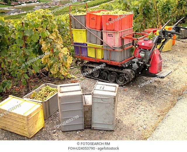 Switzerland, Europe, valais, wallis, Fully, Rhone Valley, Fendant Wine Region, wine harvest, vineyards