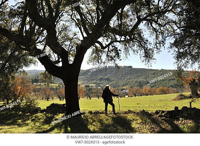 Cork tree in Autumn. Sao Mamede Natural Park, Portugal