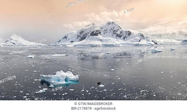 Bahia Paraiso, Paradise Bay, Antarctic Peninsula, Antarctica
