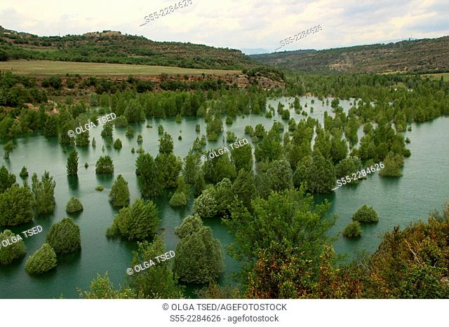 Trees in the water, Canelles Pantano, Congost de Mont-Rebei, Catalonia, Lerida, Spain