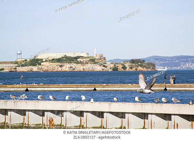 View of Alcatraz from the bay, with seagulls flying on a blue sky, gorgeous day in San Fransisco, California, Usa