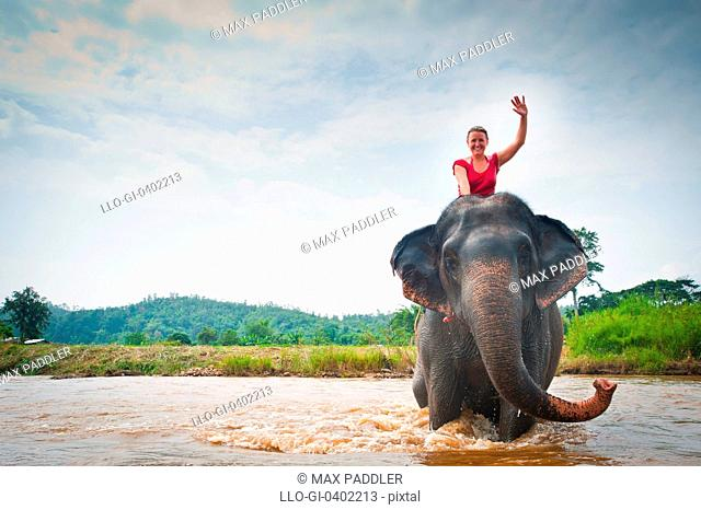 Woman waves while sitting on elephant bathing in river in Pai, Northern Thailand, Thailand