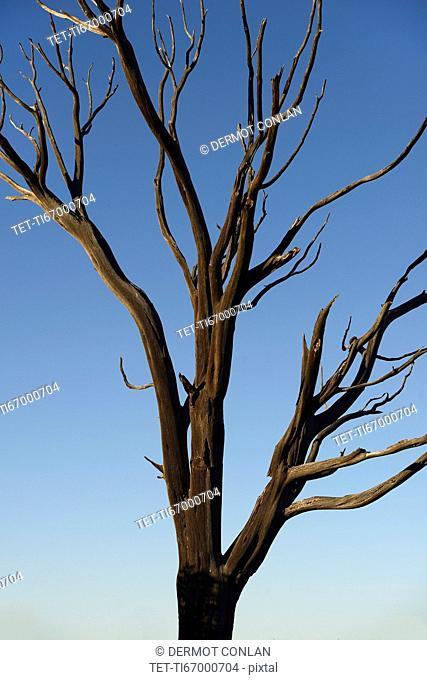 Burnt tree on Wetherill Mesa in Mesa Verde National Park