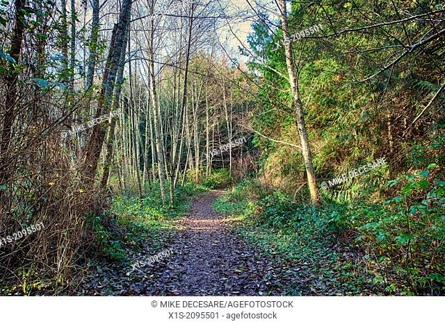 Hiking trail in Hansville, Washington, carpeted with fall leaves
