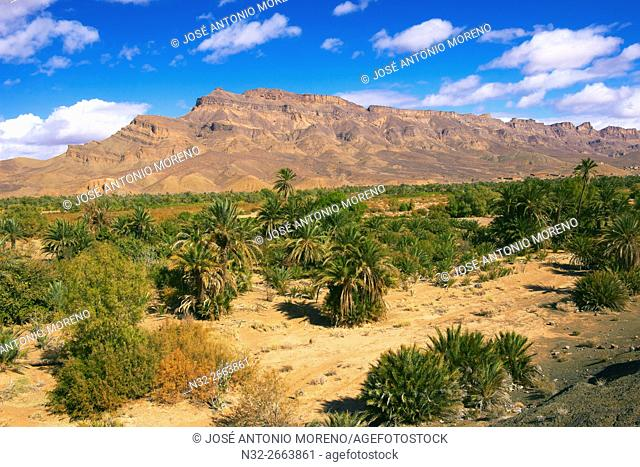Djebel Kissane, Palm Grove, Oasis, Draa Valley, Souss-Massa-Draa region, Valley of the Draa river, Anti Atlas, Morocco, Maghreb, North Africa