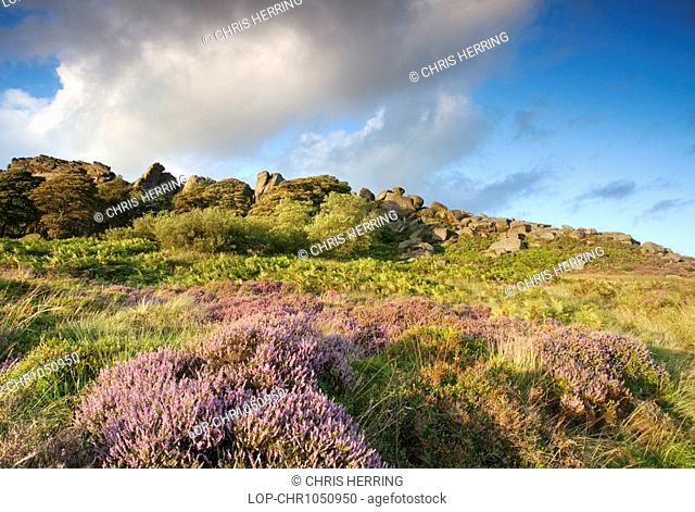 England, Staffordshire, The Roaches, The Roaches, a wind-carved outcrop of gritstone rocks, illuminated by warm evening light in the Peak District National Park