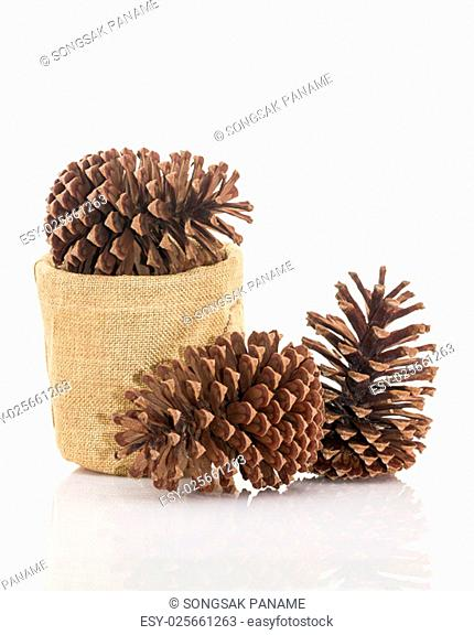 Dry pine cones on white background with shadow